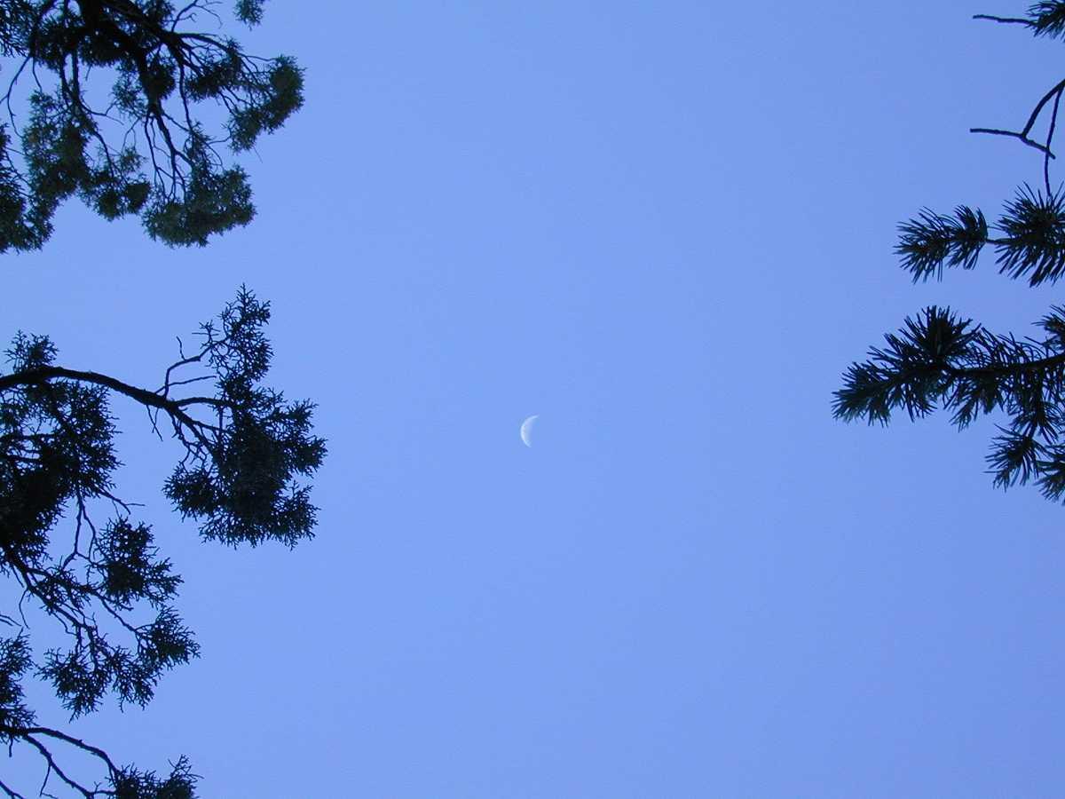 Cresent Moon Between The Trees